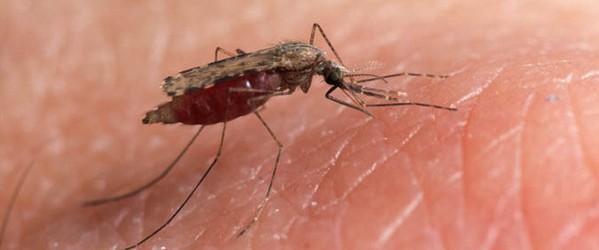 Come curare le punture di insetti nei bambini