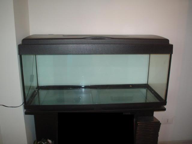 Acquario per tartarughe consigli per gli acquisti for Acquario per tartarughe