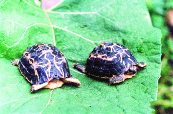 Acquario per tartarughe consigli per gli acquisti for Acquario tartarughe prezzo