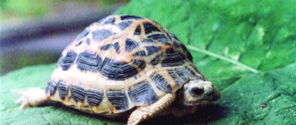 Acquari per tartarughe, consigli e suggerimenti