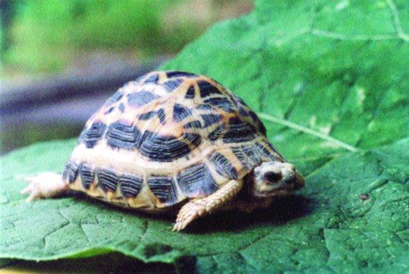 acquari per tartarughe consigli e suggerimenti