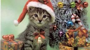 natale: idee regalo per il tuo gatto