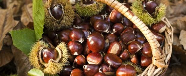 Raccogliere e conservare castagne: ed è subito autunno